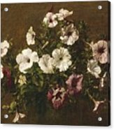 Petunias Acrylic Print by Ignace Henri Jean Fantin-Latour