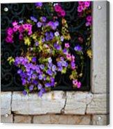 Petunias Through Wrought Iron Window Acrylic Print