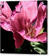 Pflower Pfunn Acrylic Print