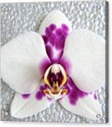 Phalaenopsis Yu Pin Panda  Acrylic Print