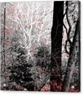 Phantasm In Wildwood Acrylic Print
