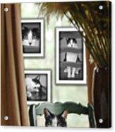Phat Cat Acrylic Print