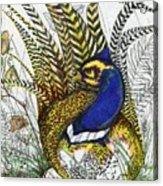 Pheasant Blue Acrylic Print