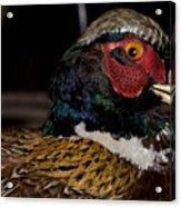 Pheasant In The Eye Acrylic Print