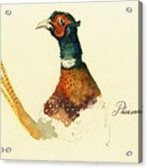 Pheasant Painting Acrylic Print