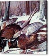 Pheasants Hunt - Sold Acrylic Print