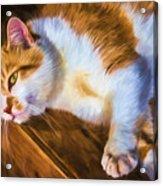 Philipsburg Manor - Barn Cat Nap Acrylic Print