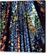 Phil's Trees Acrylic Print