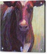 Phoebe Of Merry Mead Farm Acrylic Print