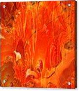 Phoenix Acrylic Print
