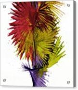 Phoenix Is Rising Series 1799.022414 Acrylic Print