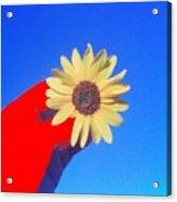 Phone Cam 491 Sun Flower Acrylic Print