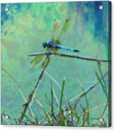 Photo Painted Dragonfly Acrylic Print