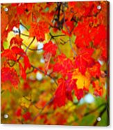 Photo Synthesis Acrylic Print by Diane E Berry