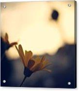 Photo4 Acrylic Print