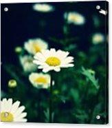 Photo5 Acrylic Print