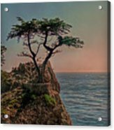 Photogenic Tree Acrylic Print
