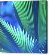 Photograph Of A Royal Palm In Blue Acrylic Print