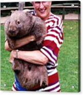 Phyllis Holding Thirty Lb Wombat Australia Acrylic Print