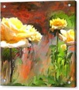 Picaras Acrylic Print