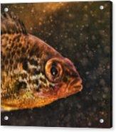 Pices In Aquarium Acrylic Print