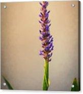 Pickerel Rush Pond Flower Painting Acrylic Print