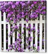 Picket Fence Rhododendron Acrylic Print
