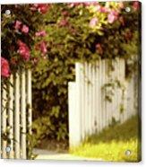 Picket Fence Roses Acrylic Print