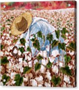 Picking Cotton Acrylic Print by Barbel Amos