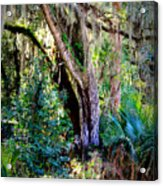 Picnic Time In Florida Acrylic Print
