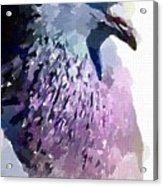 Pidgeon Acrylic Print