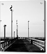 Pier And Pelican Acrylic Print