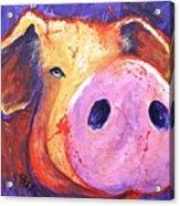 Pig On Purple I Acrylic Print