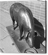 Pig Sculpture Grand Junction Co Acrylic Print