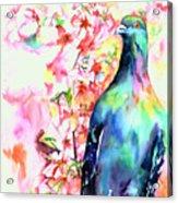 Pigeon Eye Acrylic Print by Christy  Freeman