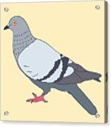 Pigeon Yellow Acrylic Print