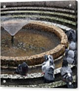 Pigeons Are In The Fountain Refreshes Acrylic Print