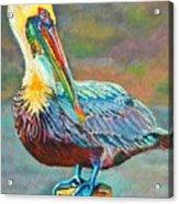 Pile High Pelican Acrylic Print