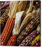 Pile Of Indian Corn Acrylic Print