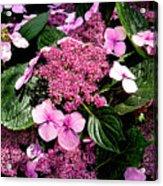 Pile Of Purple Acrylic Print