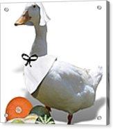 Pilgrim Duck Acrylic Print