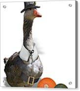 Pilgrim Goose Acrylic Print