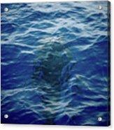 Pilot Whale 9 The Mermaid  Acrylic Print