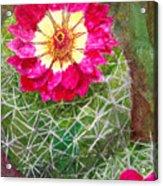 Pincushion Cactus Acrylic Print