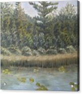 Pine And Lily Pads 2  Acrylic Print