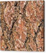 Pine Bark Acrylic Print