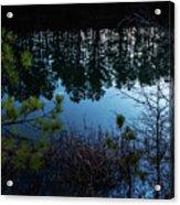 Pine Barren Reflections Acrylic Print