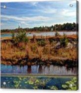 Pine Barrens Bog In New Jersey Acrylic Print