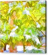 Pine Branch Under Snow Acrylic Print