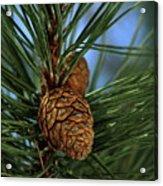 Pine Cone 2 Acrylic Print